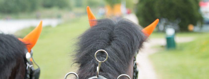 VoskampHall-Gregor Melsen powerhorse